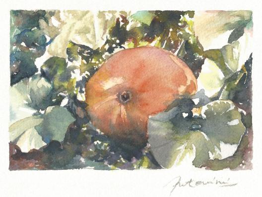 """""""Le potiron de Loulou"""" Aquarelle sur papier Arches. Format : 10x15. 2002"""