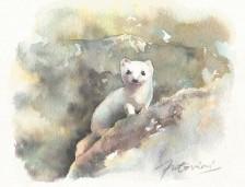 """""""Hermine dans la neige"""" Aquarelle sur papier Arches. Format : 13x11. 2002"""